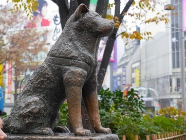Hachi's statue home at Shibuya Station