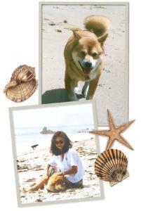 Shiba Inu dog Hachi: A Dog's Tale